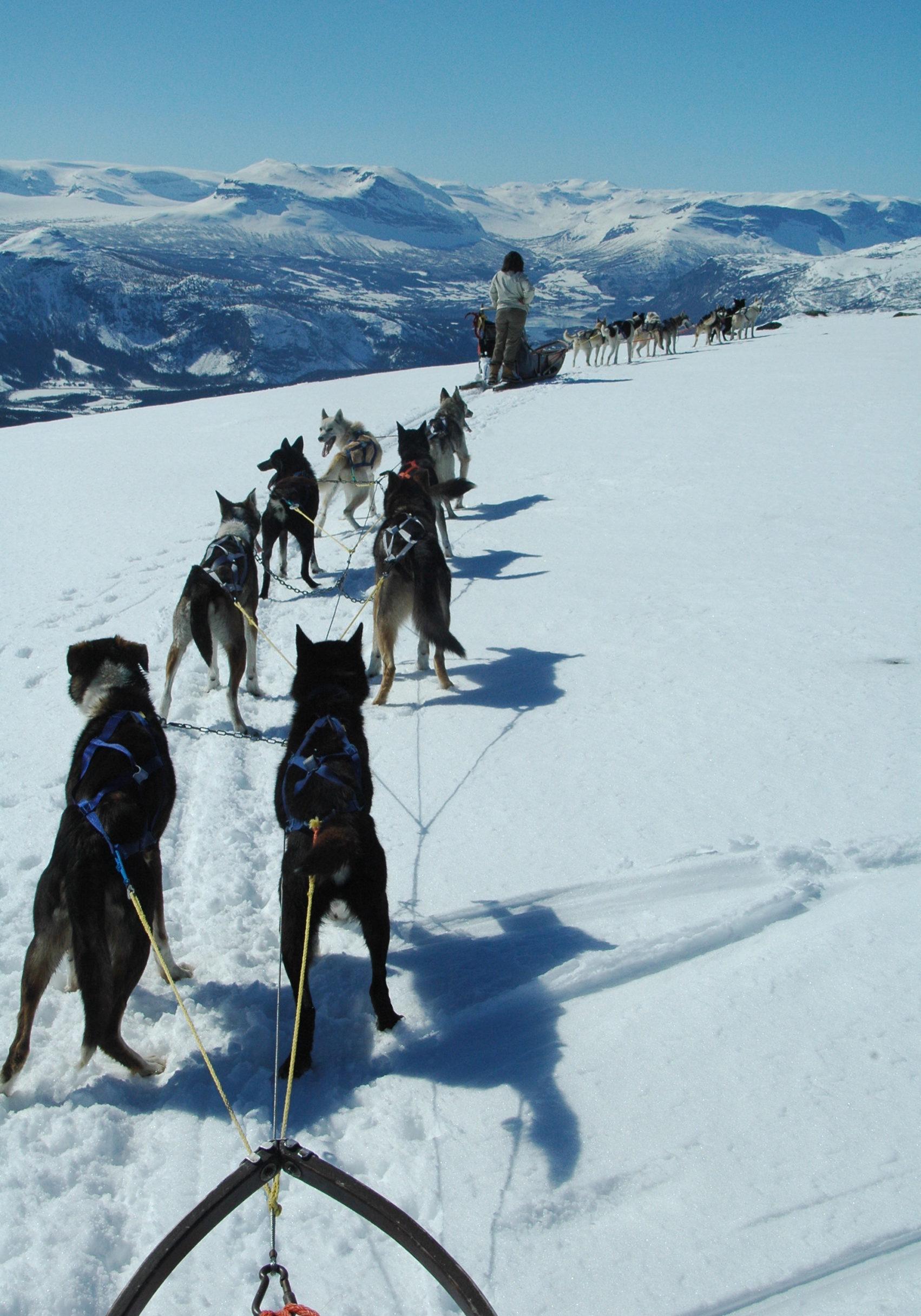 nordicwinter_Hundeschlittentour_Norwegen_Huskytour_NOR120_036