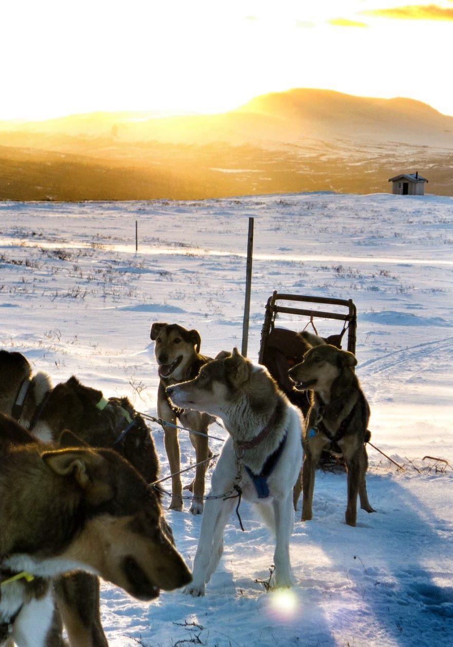 nordicwinter_Hundeschlittentour_Norwegen_Huskytour_NOR140_001
